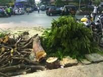 तब्बल ६३ झाडांची कत्तल, नाला रूंदीकरणासाठी घेतला बळी