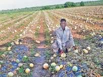 अतिवृष्टीग्रस्त शेतकऱ्यांना हेक्टरी ८ हजार रुपये मदत; राज्यपालांची घोषणा