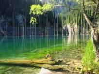 जमिनीवरची जंगलं पाहिली असतील, पण पाण्यातलं हे जंगल पाहिलयं का?