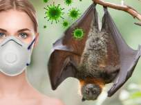 CoronaVirus : मागिल २० वर्षात 'या' तीन प्राण्यांनी पसवलेली महामारी, लाखो लोकांचा झालेला मृत्यू - Marathi News | CoronaVirus : disease came from bats through coronavirus in human qualities of virus host myb | Latest health Photos at Lokmat.com