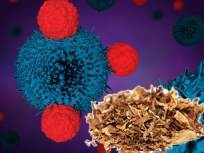 निकोटीनमुळे फक्त फुफ्फुसांचा नाही तर ९ प्रकारच्या कॅन्सरचा असू शकतो धोका; असा करा बचाव - Marathi News | Nicotine can cause not only lung but also 9 types of cancer myb | Latest health News at Lokmat.com