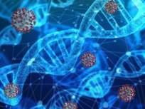 'ही' जीन्स असलेल्या लोकांना कोरोना विषाणूंचा धोका जास्त; संशोधनातून खुलासा - Marathi News | Coronavirus and dementia america dementia associated genes also threaten covid19 myb | Latest health Photos at Lokmat.com