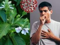 कफ पातळ करून शरीर निरोगी ठेवण्यासाठी फायदेशीर अडुळसा; संक्रमणापासून राहता येईल दूर - Marathi News   CoronaVirus : Health malabar nut adulsa is beneficial to fight with coronavirus   Latest health News at Lokmat.com