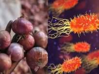काळजी वाढली! कांद्यामुळे पसरतंय 'या' बॅक्टेरियाचं संक्रमण; CDC नं सांगितली लक्षणं, जाणून घ्या - Marathi News | CDC warns of mysterious salmonella outbreak spreading through onion in usa and canada | Latest health News at Lokmat.com