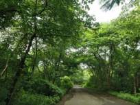 गोष्ट संरक्षित वनाची! - Marathi News | Aarey Maharashtra to reserve 600 acres of land in Mumbai as forest | Latest manthan News at Lokmat.com