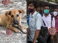 आता कुत्र्यांच्या मदतीने कोरोना चाचणी होणार; 'अशी' केली जाणार तपासणी - Marathi News | Finland deploys coronavirus sniffing dogs at airport as way to detect infection | Latest health News at Lokmat.com