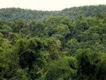 विदर्भातील ८४ हजार ४८६ हेक्टर जमीन वनक्षेत्र घोषित होणार