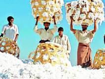 कापूस खरेदीची शेतकऱ्यांना प्रतीक्षा