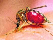 डेंग्यूबाबत नगरसेवकांकडून जनजागृती