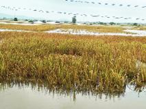 महापुरात ३ लाख शेतकऱ्यांचे १३०० कोटींचे नुकसान