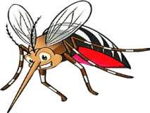 डेंग्यूच्या पार्श्वभूमीवर आता मोठे खांदेपालट