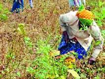 निवडणुकीच्या धामधुमीत शेतकरी दुर्लक्षित