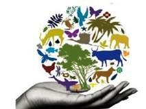 परभणी : १५८ जैव विविधता समित्या कागदावरच