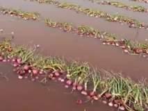 परतीच्या पावसाने शेतकऱ्याचा केला घात