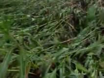 पारोळा तालुक्यात पावसाने झोडपले : पिकांचे नुकसान