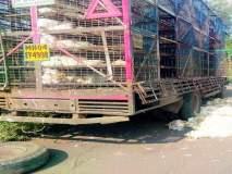 ट्रक उलटून ४०० कोंबड्या मृत्युमुखी