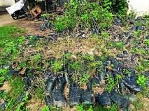 इल्लुर ग्रामपंचायतीने वृक्ष लागवडीकडे फिरविली पाठ
