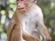 परभणी : माकडाच्या चाव्याने महिला गंभीर