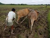 उद्यापासून पुढील चार दिवस राज्यात वादळी पाऊस, कृषी विभागाचा शेतकऱ्यांना इशारा