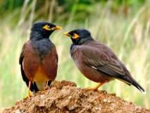 पक्ष्यांशी बोलणारा अवलिया आला गोंदियाच्या नागझिऱ्यात !