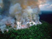 Amazon Rainforest Fire : जगातील सर्वात घनदाट जंगलाला भीषण आग