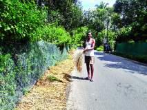 पावसाने भातपिकाची नासाडी