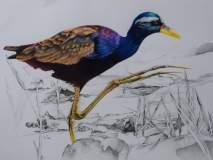 कॅनव्हासवर साकारले जिवंत प्राणी-पक्षी
