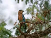 कारशेड परिसरात २१ प्रजातींच्या पक्ष्यांचा अधिवास, पर्यावरणप्रेमींचा दावा