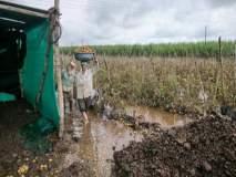 शेतकऱ्यांची मदत अडकणार सत्तास्थापनेच्या कचाट्यात