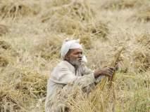 सरसकट शेतकरी कर्जमाफीचा मार्ग होणार मोकळा ?