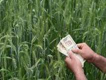 अकोला जिल्ह्यात केवळ ४१ हजार शेतकऱ्यांना पीक कर्ज!