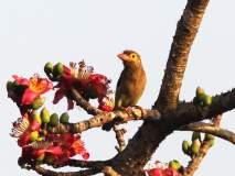 उजनीप्रमाणेच कुरनूर धरणावर परदेशी पक्ष्यांचा मेळा; ९० विविध प्रजातीचे पक्षी दाखल