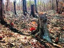 मुलुंड दुर्घटना; वृक्ष छाटणीचा ठेकेदाराने दिला बोगस अहवाल