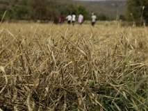 राज्यात ९० लाख हेक्टर पिकांच्या नुकसानीचा अंदाज