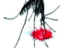 शहरात ७00 पेक्षा जास्त डेंगूचे रूग्ण
