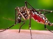 डेंग्युसदृश आजाराने युवतीचा मृत्यू