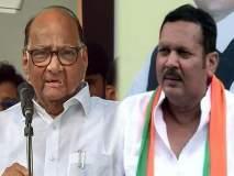महाराष्ट्र निवडणूक 2019 : सातारकरांचा विधानसभेत 'समान न्याय'; पण लोकसभा 'किंग' ठरवणार