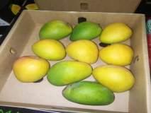 मलावी देशातील हापूस आंबा विक्रीसाठी आज येणारमुंबईत