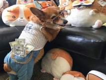 'या' Dog's चं आलिशान जगणं पाहून तुमची श्रीमंतीही वाटू लागेल कमी!