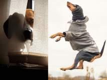 कुत्र्यांचं 'असं' भन्नाट फोटोसेशन पाहिलंय का?