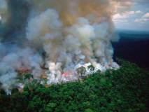Amazon Rainforest Fire:'अॅमेझॉन'साठी एकवटले बॉलिवूड; अनुष्का, विराट, अर्जुनने व्यक्त केली चिंता