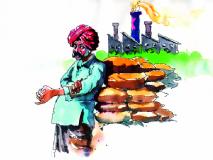आंतरपिकातील मिरची लागवडीने शेतकऱ्याला झाला दुहेरी लाभ