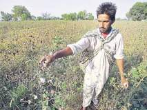 पिकांच्या नुकसानभरपाईकडे खिळली शेतकऱ्यांची नजर!