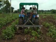 शेतकऱ्याने दोन एकरातील वांग्याच्यापिकावर फिरविला ट्रॅक्टर