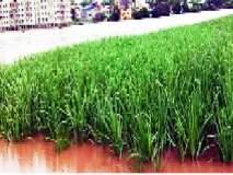 जिल्ह्यातील तीन लाख शेतकऱ्यांना कर्जमाफीचा लाभ