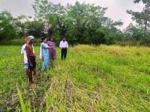 पावसामुळे नुकसान : माणगावमध्ये ४४१२ शेतकऱ्यांना फटका
