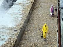 चौपाट्यांवर पुन्हा कचऱ्याचं साम्राज्य; माणसांनी टाकलेली घाण समुद्राकडून साभार परत