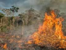 Amazon Rainforest Fire: 'अॅमेझॉन'साठी बॉलिवूडकर एकवटल्यावर आता हॉलिवूडचा 'हा' स्टार सरसावला मदतीसाठी