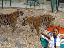 International Tiger Day: ...म्हणून वाघाच्या बछड्याला दिलं हिमा दासचं नाव