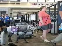 क्या बात! ...म्हणून ती घोड्याला घेऊन गेली विमानात, तुम्हालाही वाटेल कौतुक!